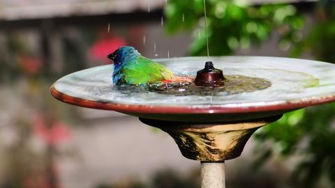 birdbaths attract birds