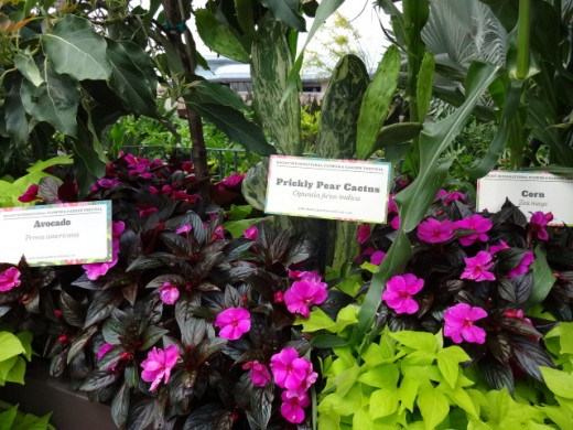 Some of the Plants that Helped Make up the Delicious Food During the Festival