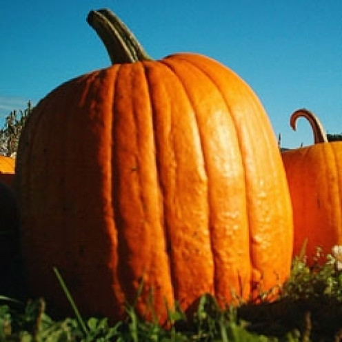 Pumpkins - combining New and Old World traditions.