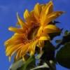 fefe42 profile image