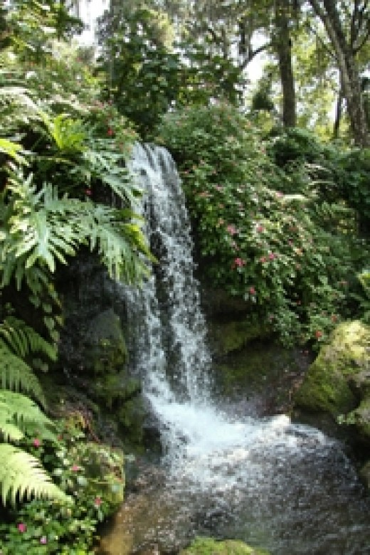 A waterfall at Rainbow Springs State Park  (Photo by Cheryl Rogers)