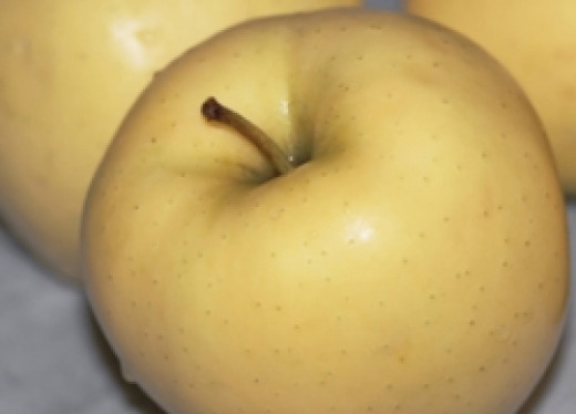 Golden delicious apple   (Photo by Cheryl Rogers)