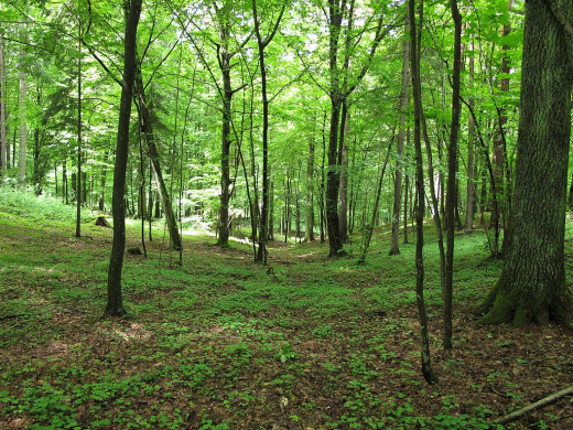 Landscaped forests promote the natural wind. Cutting undergrowth eliminates resting areas.