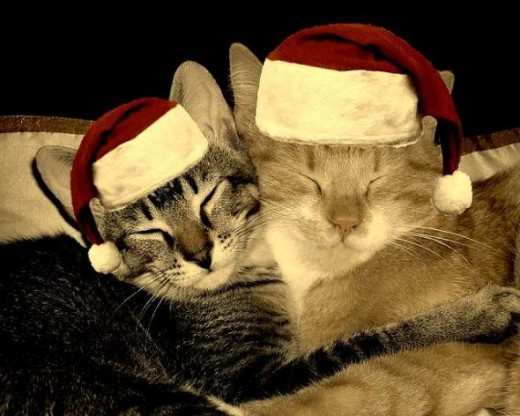 christmas cats by