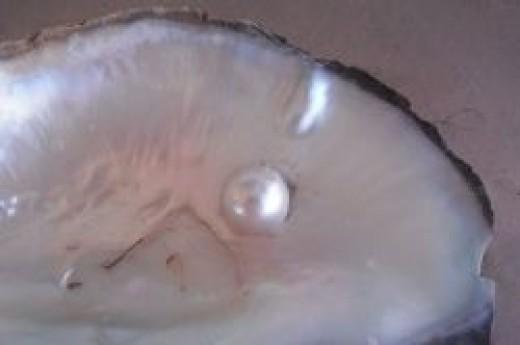Mab, demi-perle de culture - by Dinkum (Own work) [CC0], via Wikimedia Commons