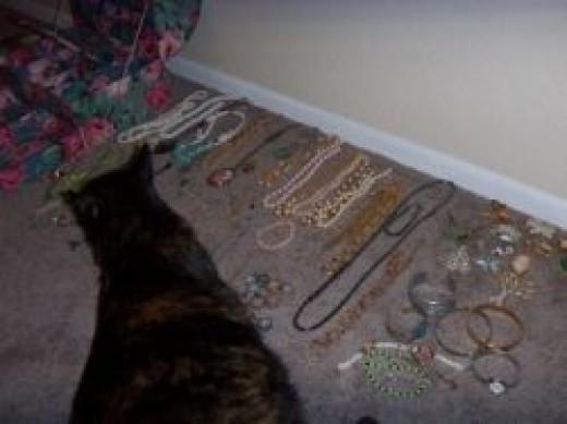 Helpful Cat (Not)