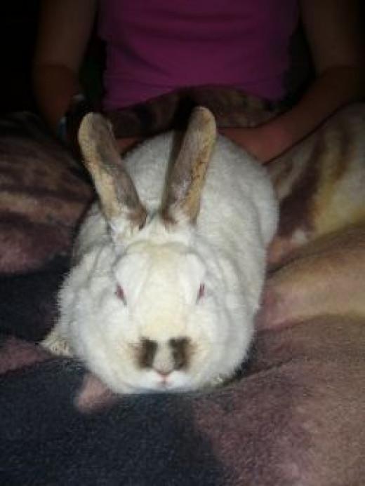 Resting rabbit. Photo Credit - Elsie Hagley