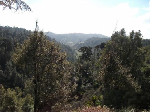Looking Through The Ridges Scenery. Photo Credit - Elsie Hagley.