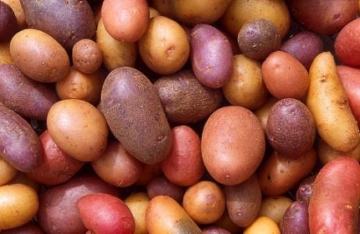 Potatoes. Photo Credit - http://en.wikipedia.org/wiki/Potato