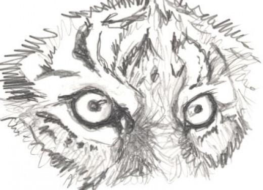 Eye Of The Tiger Pencil Sketch