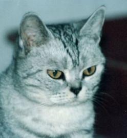 Is DeClawing A Cat Cruel?