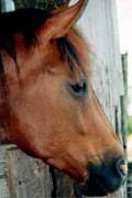 Horse Rescues: For The Love Of Horses