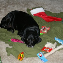 Stocking Stuffers for Dogs: A Great Gift for Family & Friends