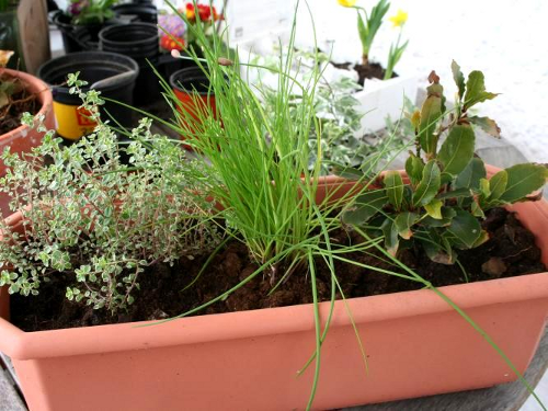 herb trough after replanting