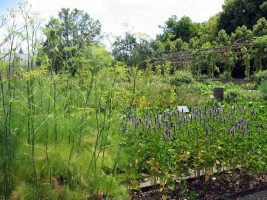 Herbs and spices in the Chamerolles garden