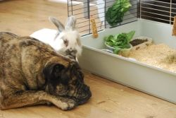can a rabbit and dog live in house together?