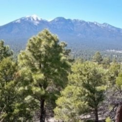 Coconino National Forest and the San Francisco Peaks