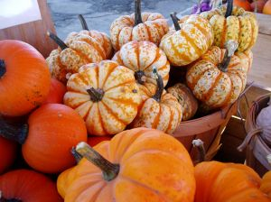 A colorful assortment of squash and pumpkins