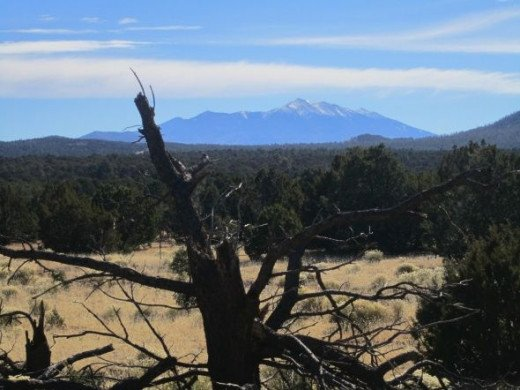 View of the San Francisco Peaks from Red Mountain Trail