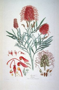 About The Bauer Brothers - Famous Botanical Artists