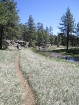 Sycamore Canyon Loop, Flagstaff