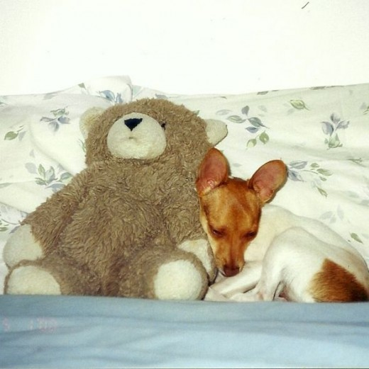 Ok, so she does love to cuddle.  When she's sleepy.
