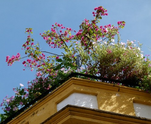 Roof top gardens help cool building in the warmer months.