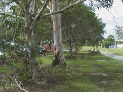 Some branches Down - Greenslopes Park