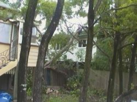 tree blown over on house in Greenslopes