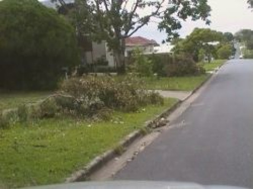 Trees blown over Greenslopes