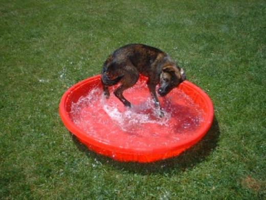 Rosco in his pool