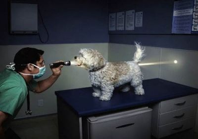 Vet Cavity Search turned up Nothing