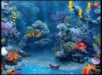 Sea Pals Aquarium Shot