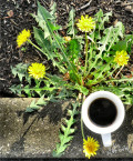 The Best Chemical Free Method Of Ridding Your Yard Of Weeds
