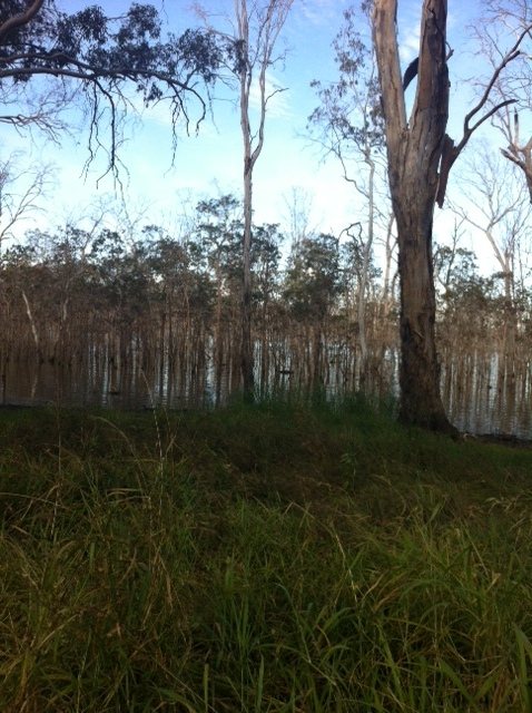 Wooroolin Wetlands