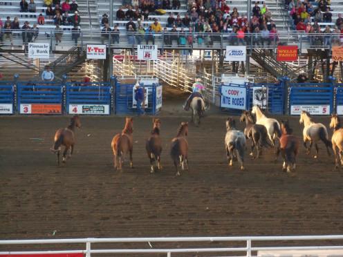 The Cody Nite Rodeo