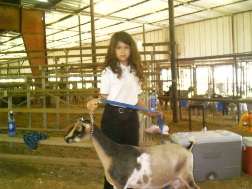 My daughter at a local goat show with our best doe. The doe is full grown, about the size of a large dog, and gives 3 qts of milk a day for about 4 months and then 1 qt for the next 5 months.