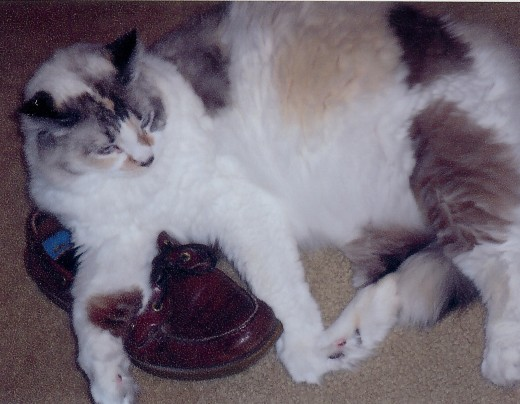 Thought that I would show you a picture of my new friend Peaches.  She just loves lying on our people's shoes.