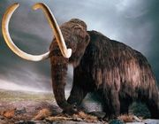 Can the Woolly Mammoth be Cloned?