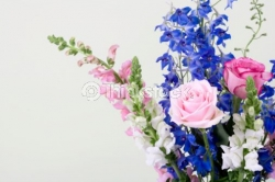 Inexpensive flowers - Delphinium