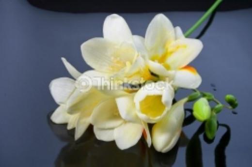 Inexpensive Flowers - Freesia