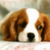 lolicious profile image