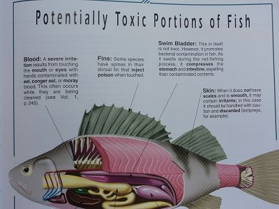 Toxic Parts of Fish