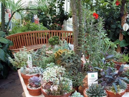 Flower pots - Flower garden - Flowers