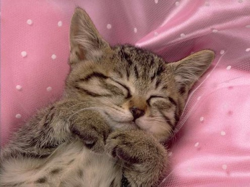 A kitten sleeping...they will sleep a lot, just like any other baby.