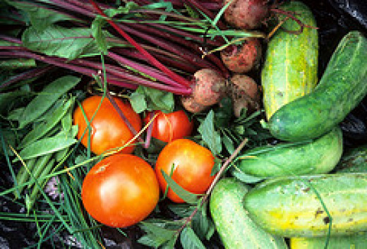 Gardening - Vegetable