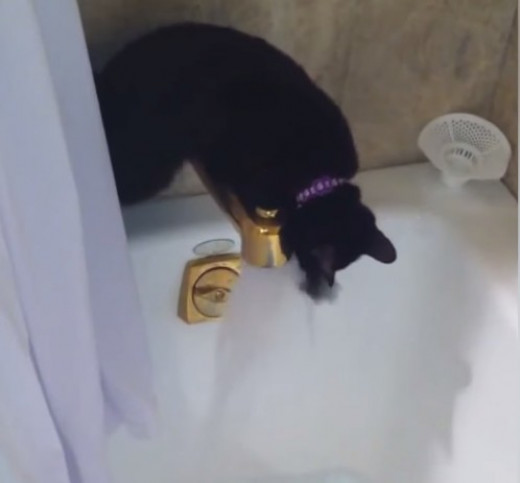 Kitty playing with water from bathtub faucet