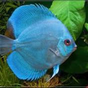 OCDiscusFish profile image
