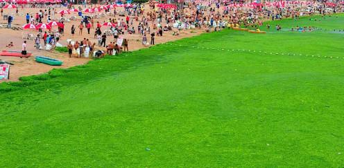 Algae beach