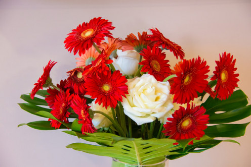 Bright red gerber daisies with soft open-faced roses sitting on monstera leaves.